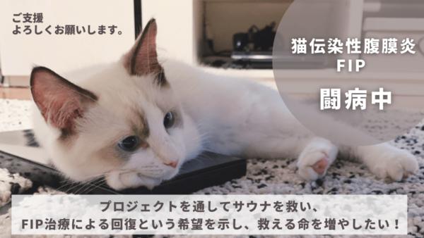 白とオレンジ 男性 コンサート YouTubeサムネイル (6)