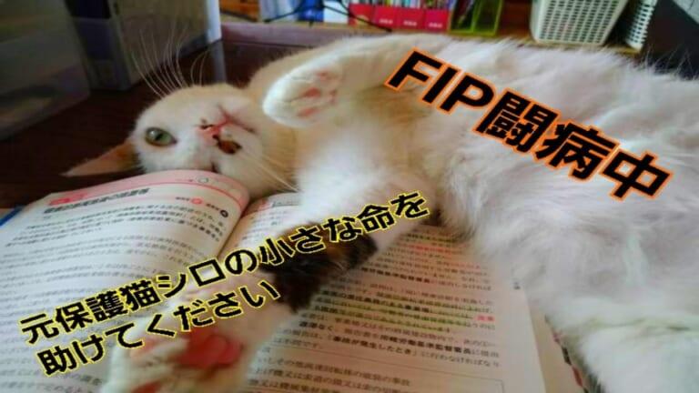 致死率99.9%【猫伝染性腹膜炎FIP】を発症した愛猫シロにお力を貸してください。