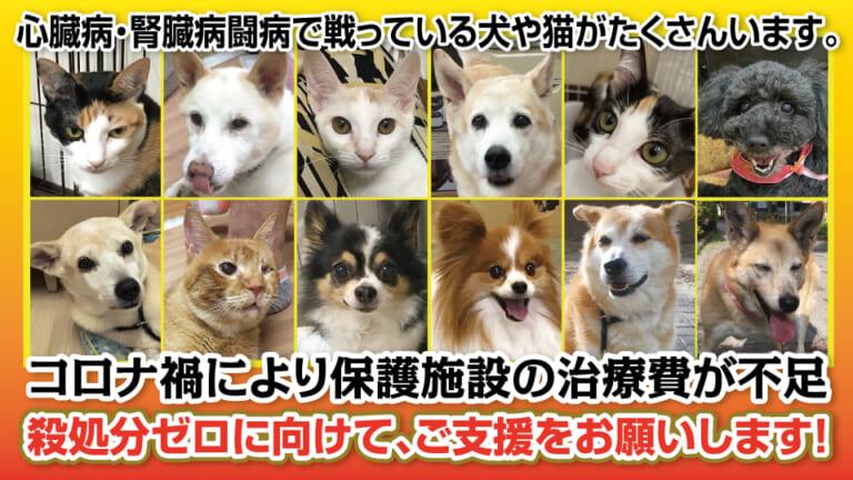 保護施設で犬猫たちの治療費が高額に。腎臓病や心臓疾患などの治療継続にご支援をお願いします。