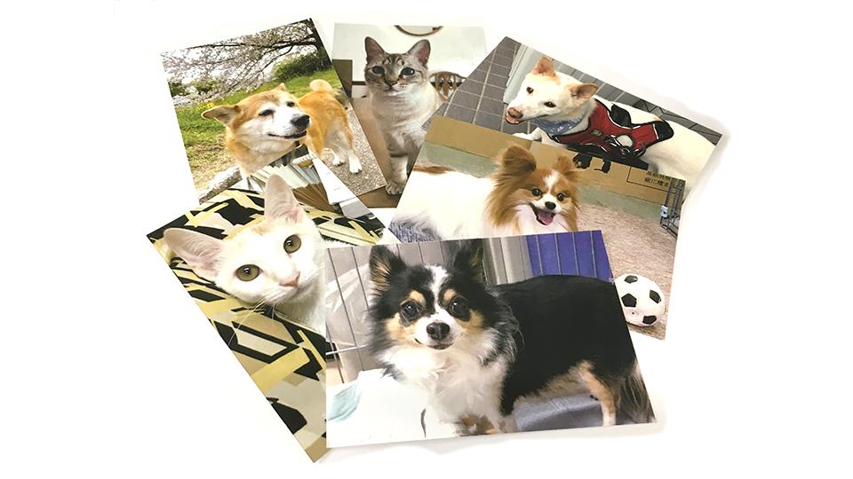 高齢犬,保護犬,病気,治療費,高額
