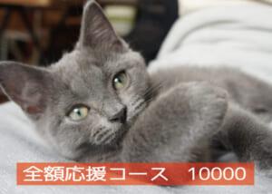全額応援コース10000-01