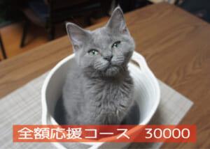 全額応援コース30000-01