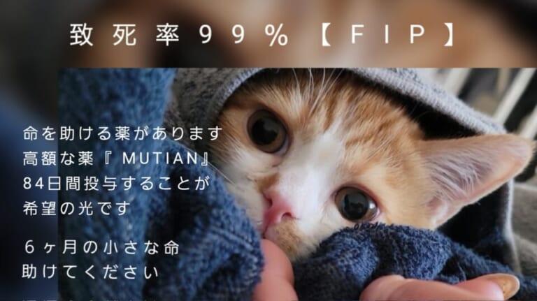 致死率99%の難病【FIP】茶々丸を助けてください。
